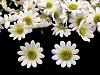 Umělý květ kopretina Ø20-25 mm