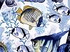 Bavlnené vaflové piké rybičky