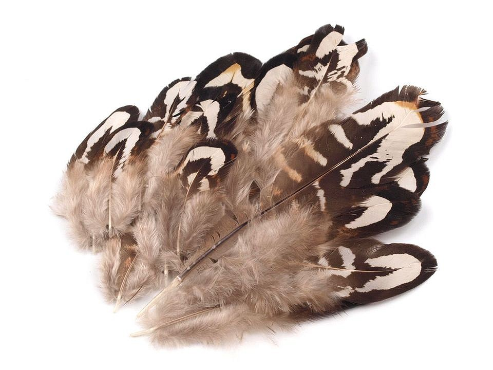 Bažantí peří délka 4-10 cm 10 ks
