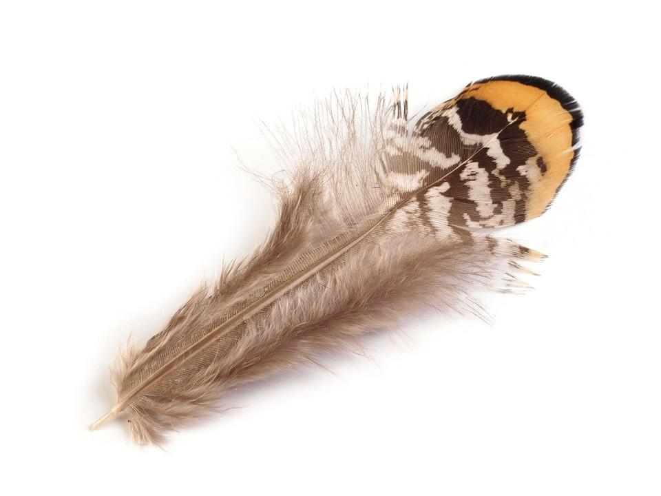 Bažantí peří délka 4,5-8,5 cm 10 ks
