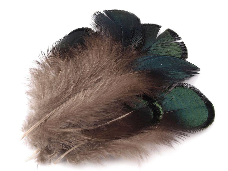 Bažantí peří délka 4,5-9 cm 20 ks