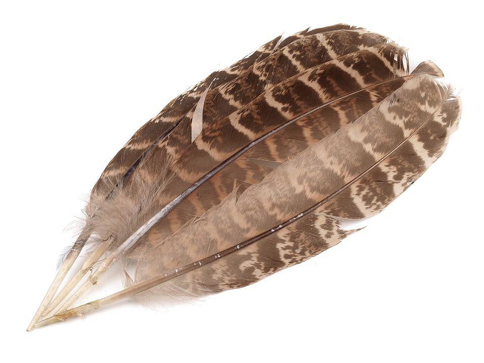 Bažantí peří délka 10-18 cm 10 ks