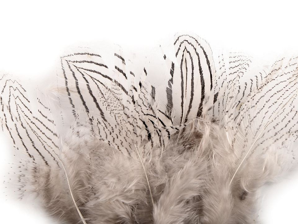 Bažantí peří délka 5 - 11 cm 20 ks
