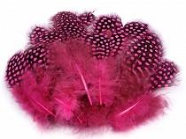 Pióra perliczka długość 8-13 cm