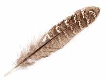 Ornamental Pheasant Feather length 10-18 cm