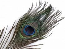 Pawie pióro długość 20-30 cm