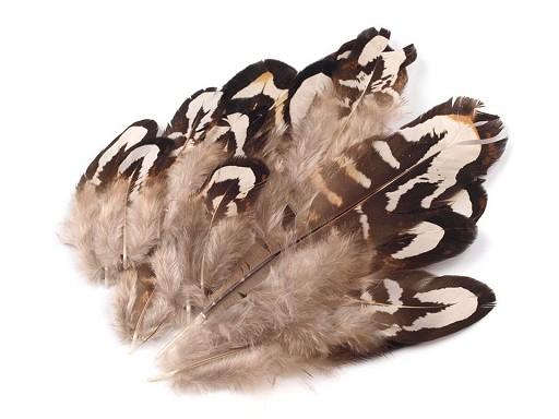 Bažantí peří délka 4-10 cm
