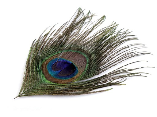 Paví peří délka 20 cm