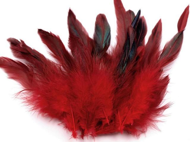 Pene decorative găină, lungime 6-20 cm