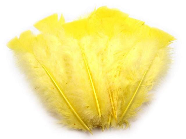 Indycze pióra długość 11-17 cm