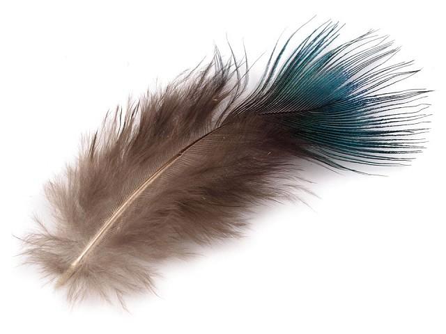 Pávie perie dĺžka 5-8 cm
