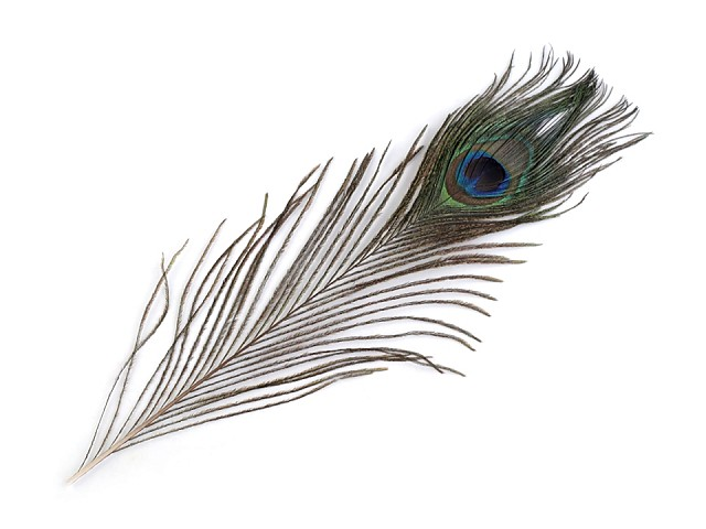 Pávie perie dĺžka 20-30 cm